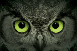 Owl Eyes - Soon