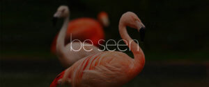 pink flamingos with be seen letter